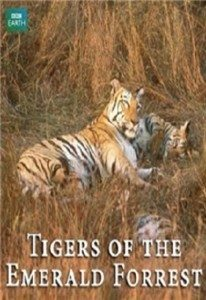 BBC Natural World – Tigers of the Emerald Forest (2003) – Documentary