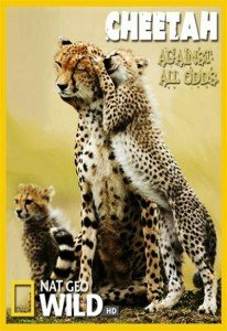 National Geographic – Cheetahs: Against All Odds – Documentary