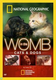 National Geographic – In The Womb – Cats (2009) – Documentary